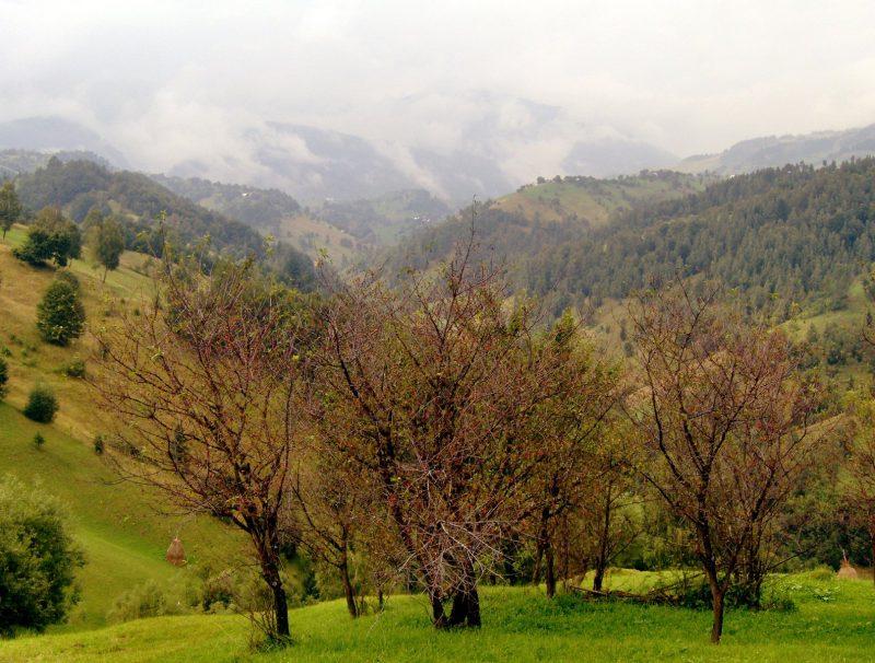 Nature: Rohit G.C.